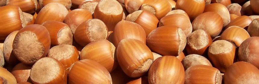 1280px-Hazelnuts